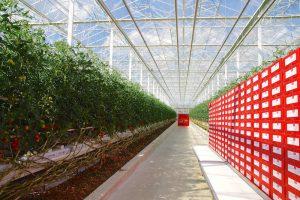 Quand nos déchets font pousser les tomates