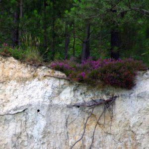 Le guêpier d'Europe a trouvé un berceau paradisiaque en Charente, à Guizengeard