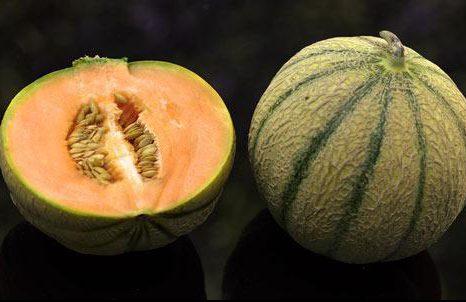 Pourquoi le melon est-il Charentais
