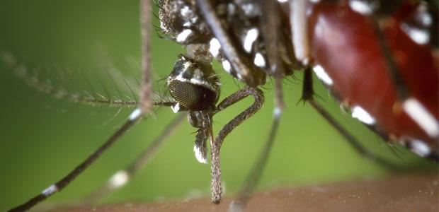 Pourquoi ne faut-il pas exterminer, tuer, les moustiques. Biodiversité