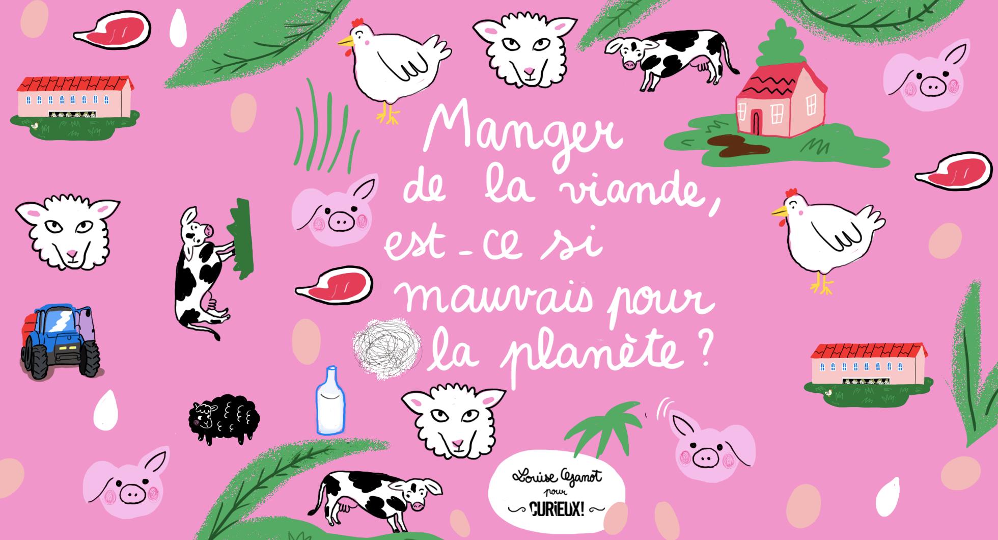 Viande et environnement, quel réel impact ?