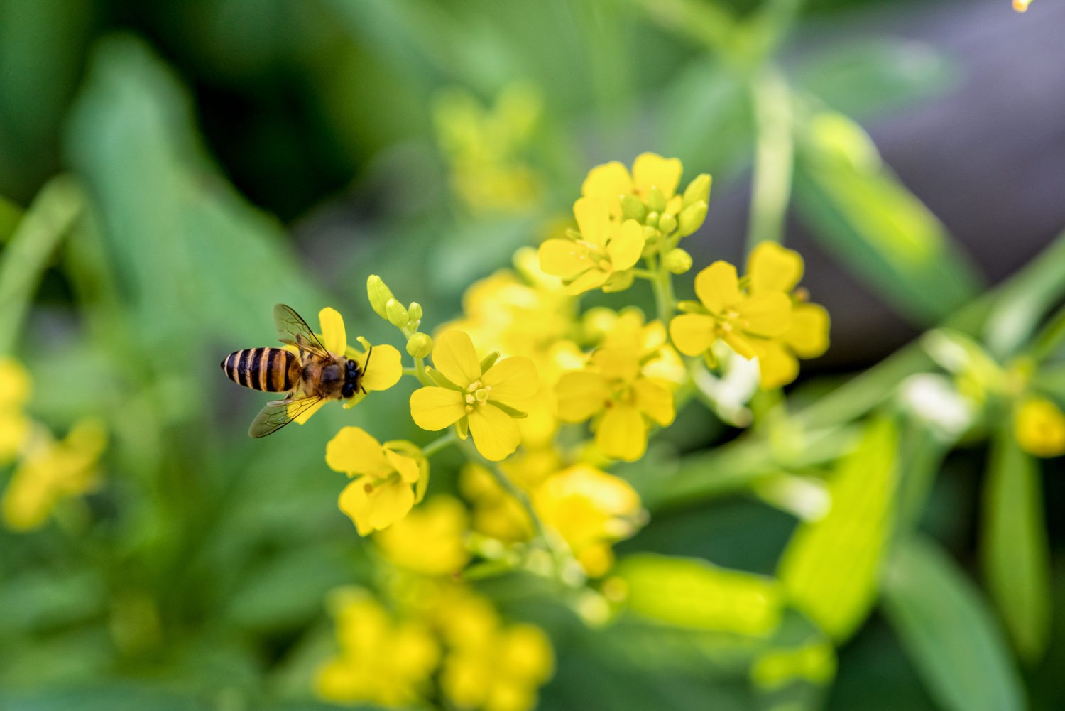 abeille pesticides
