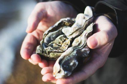 coquille d'huître