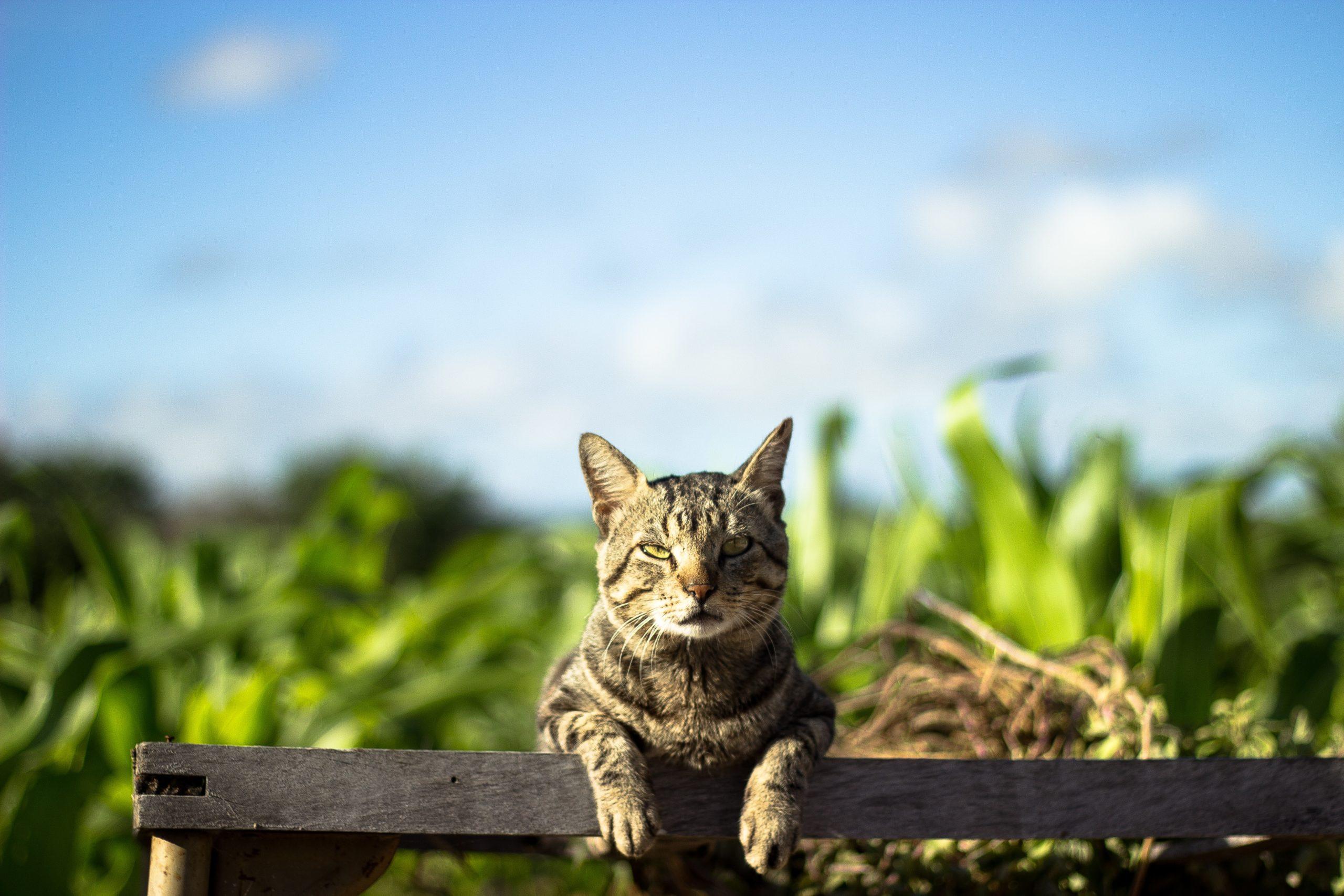 Pourquoi les chats n'obéissent pas ?