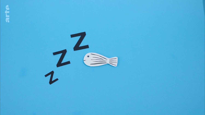 le sommeil et un poisson-zébre