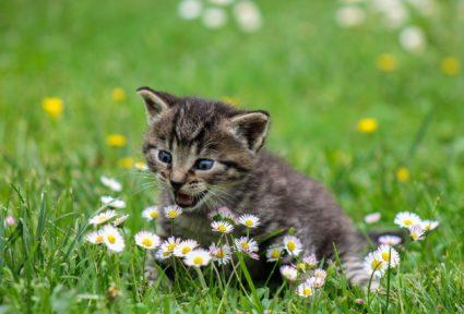idées reçues sur les chats