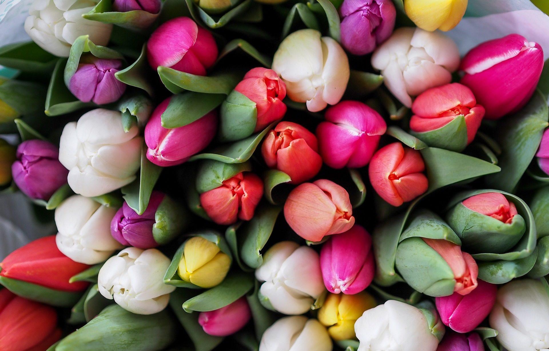 Fleurs : comment concilier Fête des mères et respect de l'environnement ?