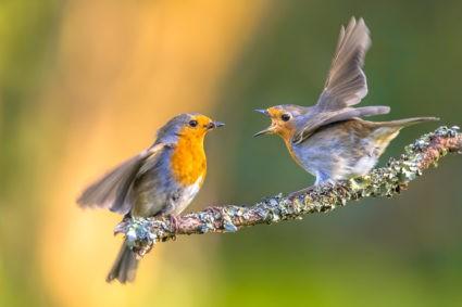 oiseaux insecticides