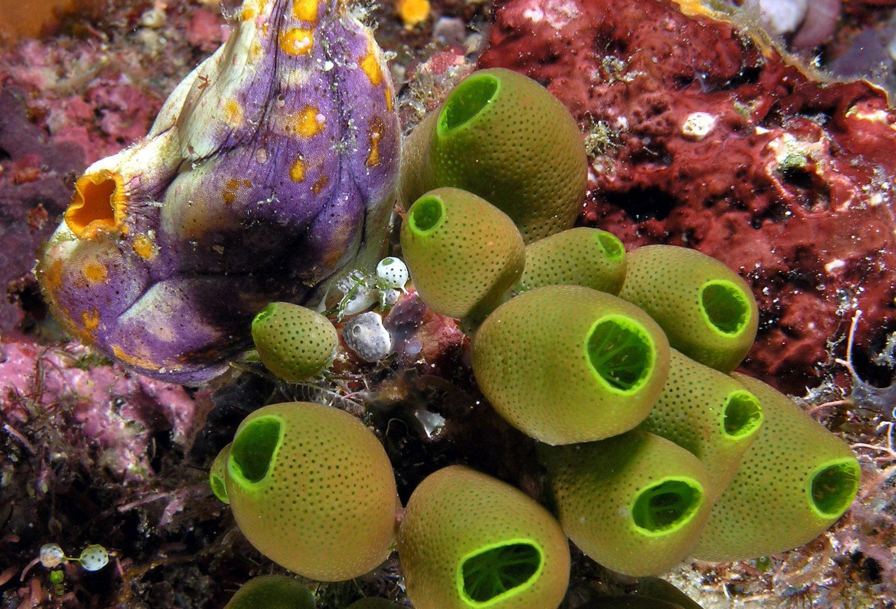 Les bisphénols issus des microplastiques affectent le cerveau – et il y en a de plus en plus dans l'océan