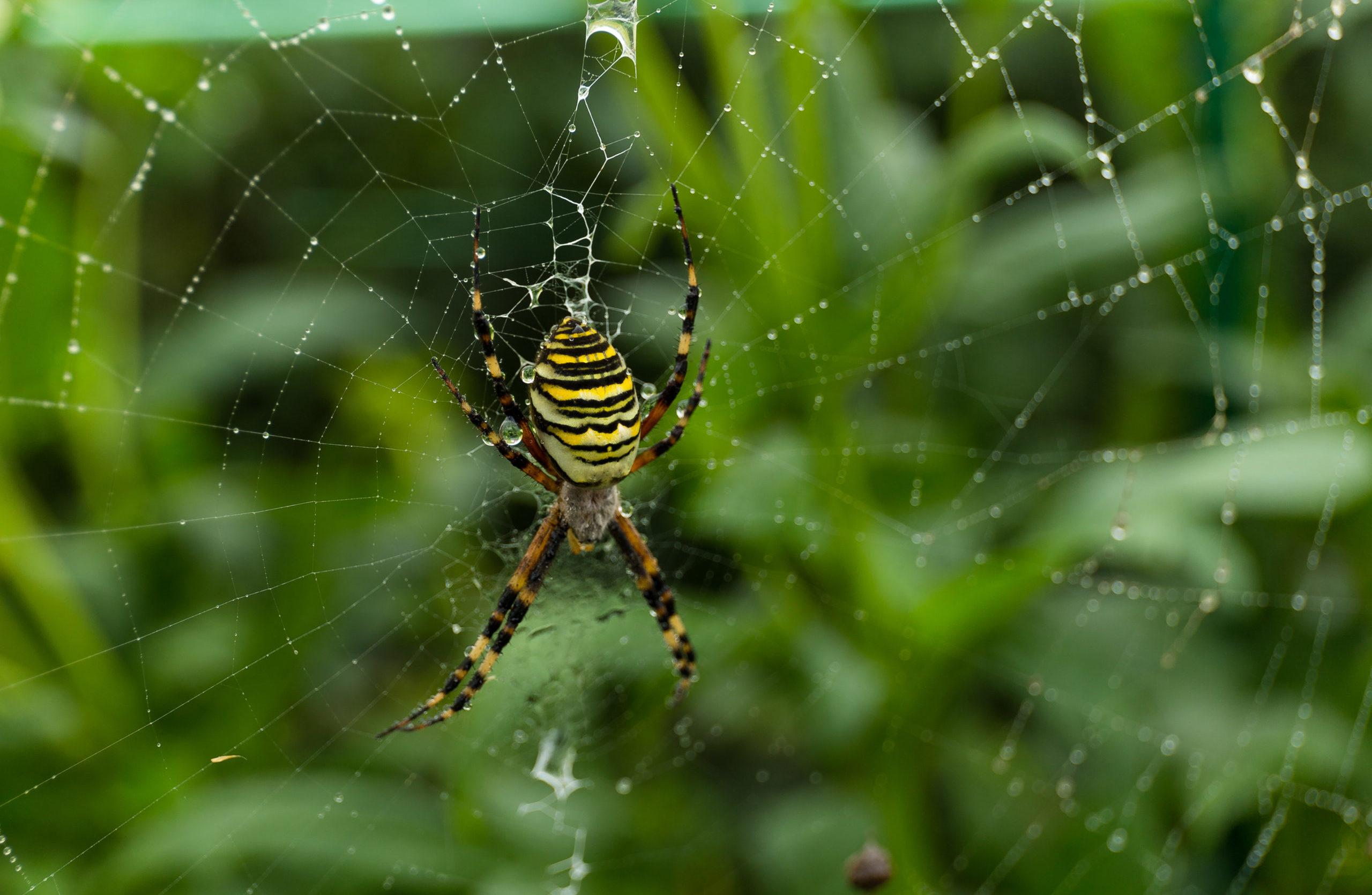Sales, toiles et poils…. 3 idées fausses sur les araignées